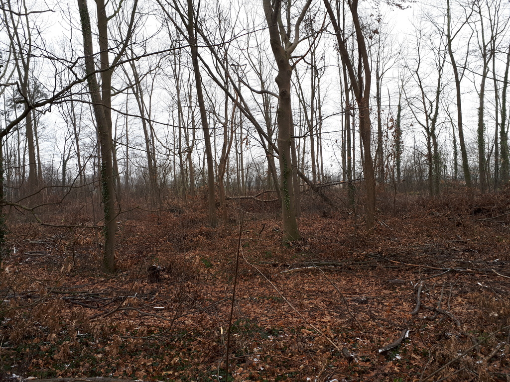 Auch nach der Aufräumaktion drohen einzelne Bäume noch umzufallen